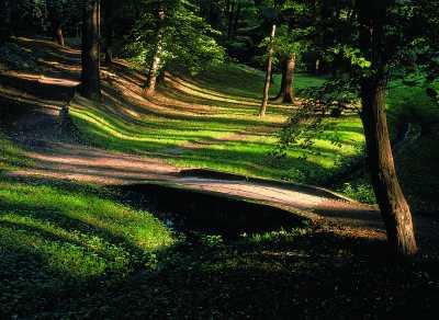 Flora miasta Brzeg