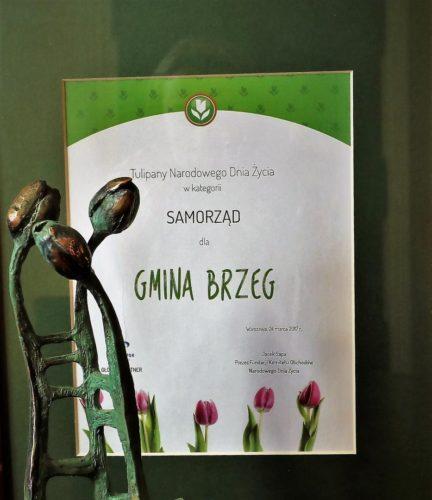 Tulipany Z Okazji Narodowego Dnia Ycia Dla Gminy Brzeg