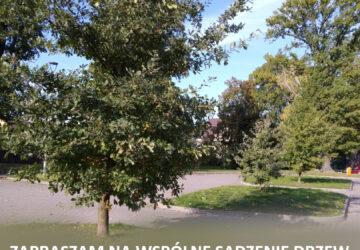 Plakat - wspólne sadzenie drzew