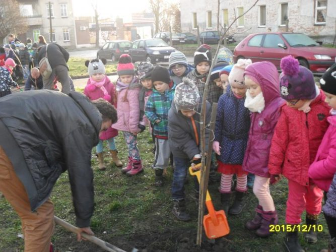 Sadzenie Drzew W Publicznym Przedszkolu Nr 5
