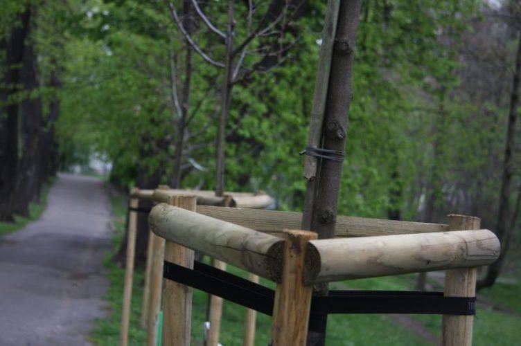 Brzeg Trwaj Wiosenne Nasadzenia Drzew W Pasach Drogowych Miejskich Ulic I Parkach